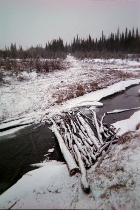 A sketchy bridge on the Iditarod trail past Rohn